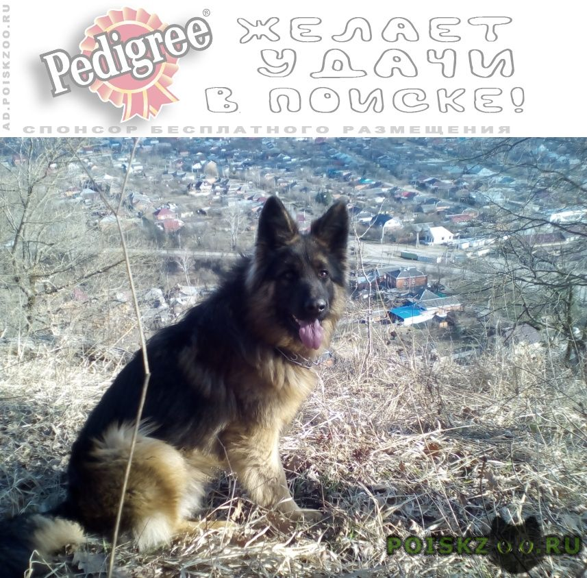 Пропала собака кобель г.Майкоп (Адыгея)