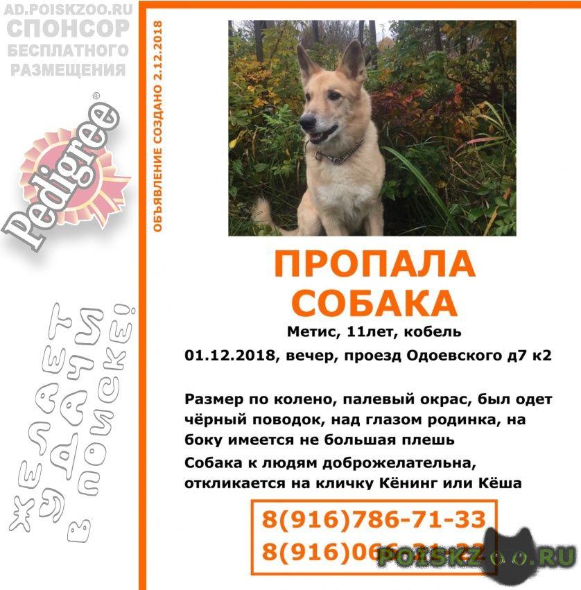 Пропала собака кобель помогите найти, мы не теряем надежды г.Москва