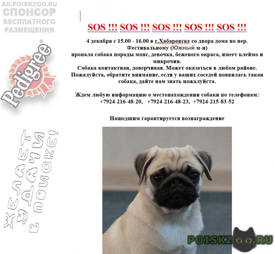 Пропала собака потерялась девочка мопса г.Хабаровск