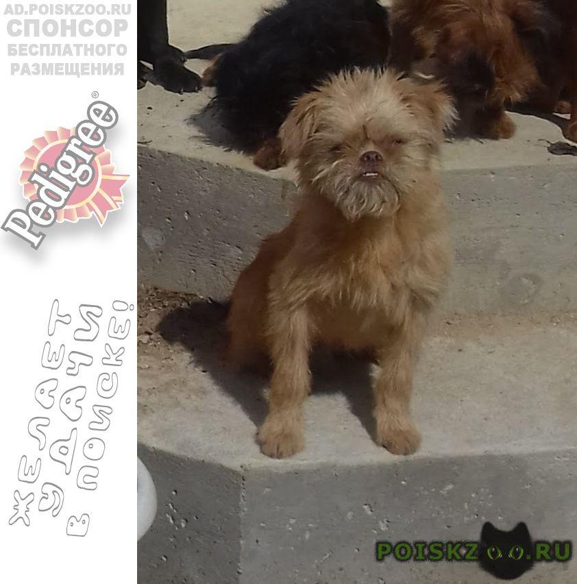 Пропала собака кобель г.Кубинка