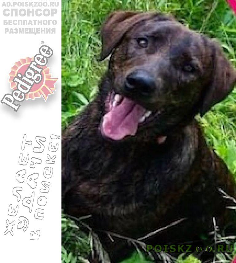 Пропала собака  бутово  тигровая  г.Москва