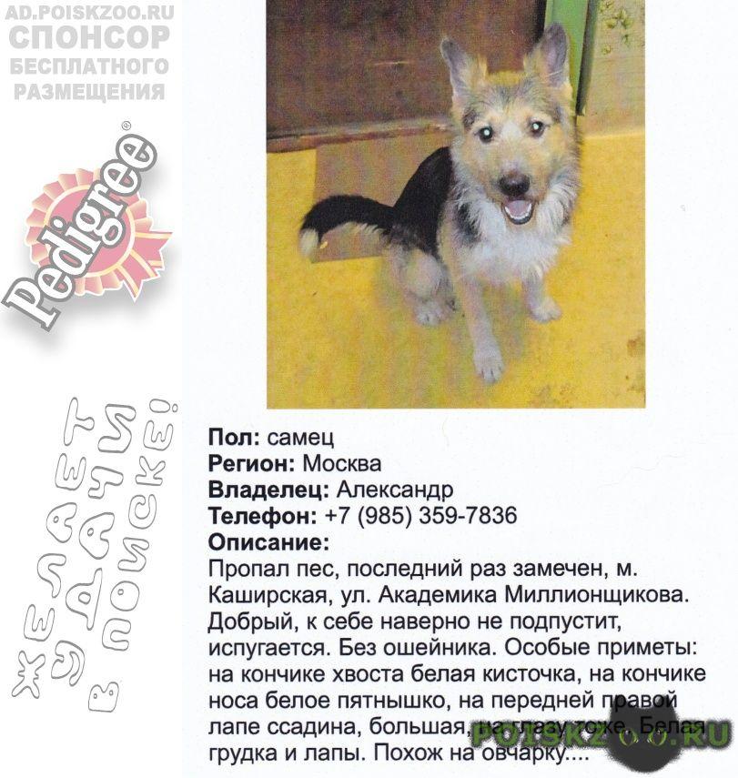 Пропала собака кобель тайфун г.Москва