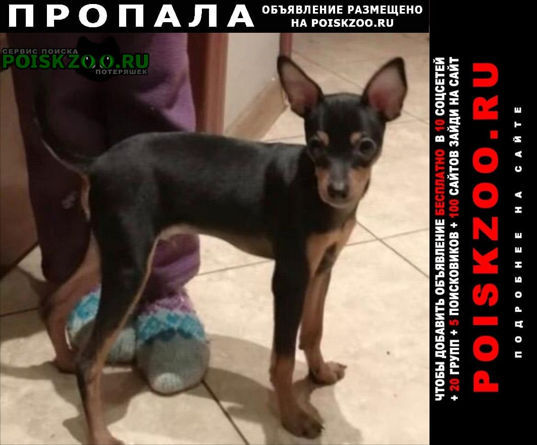 Пропала собака кобель кабель той терьер г.Москва