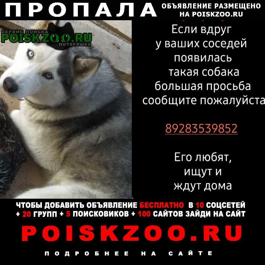 Пропала собака хаски Ессентуки