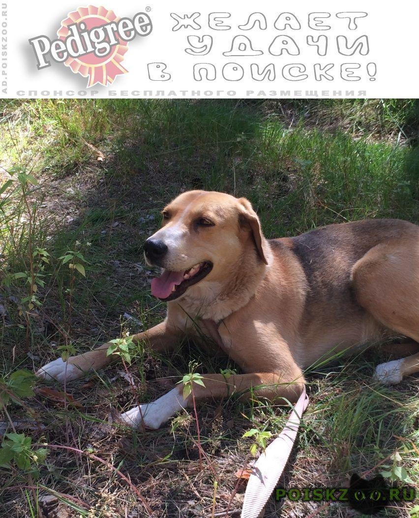 Пропала собака в р-не села федотьево г.Спасск-Рязанский