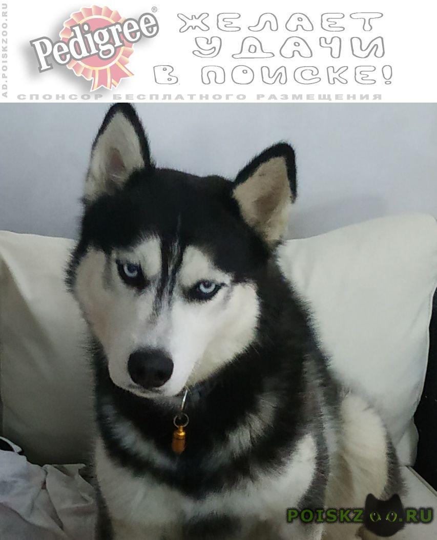 Пропала собака кобель г.Аксай (Ростовская обл.)