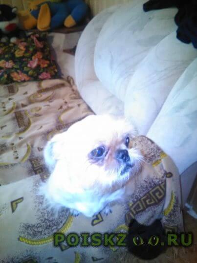 Пропала собака выкинул или врёт г.Санкт-Петербург