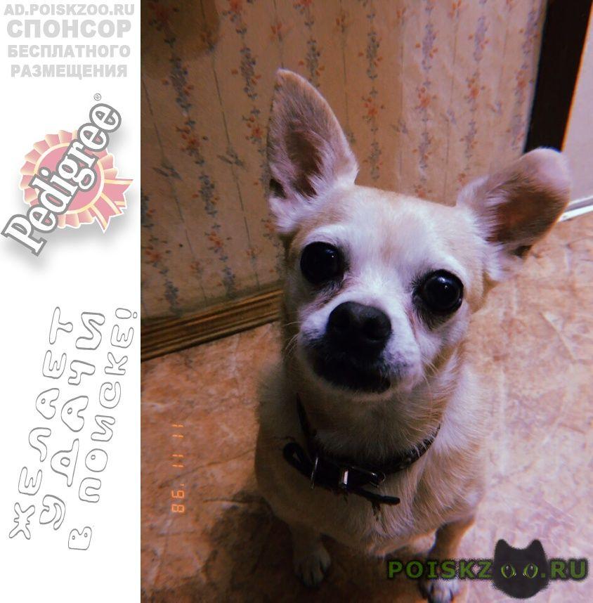 Пропала собака кобель вознаграждение гарантированно г.Москва
