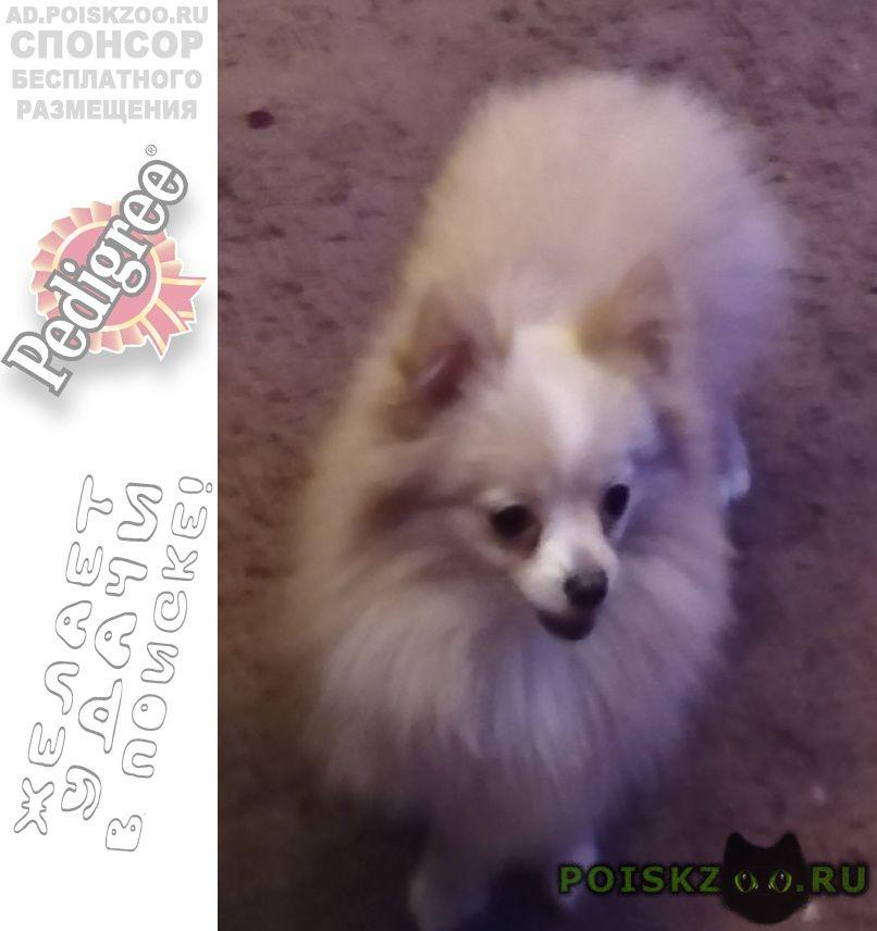 Пропала собака пожалуйста помогите найти собачку  г.Новосибирск