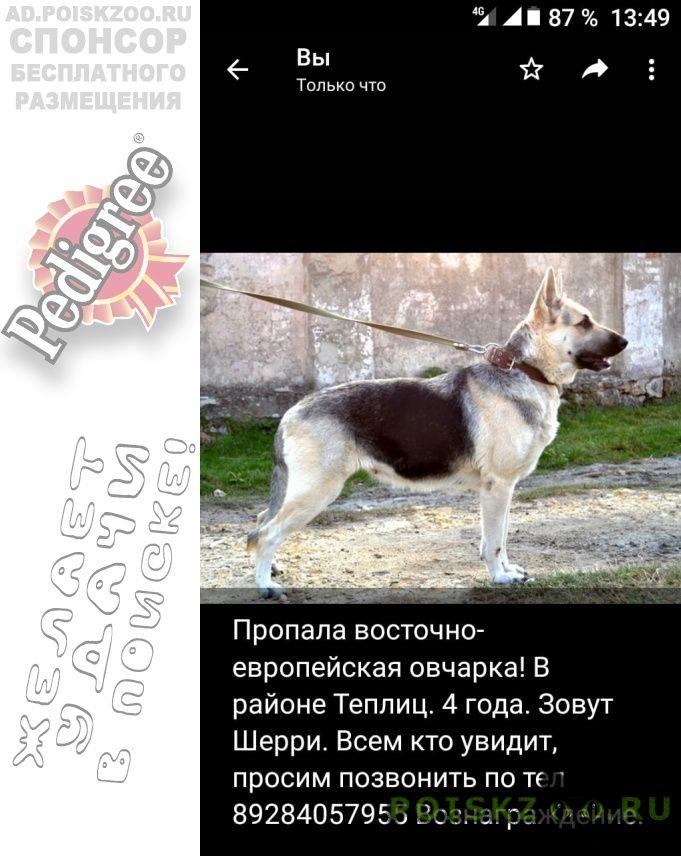 Пропала собака вео г.Крымск