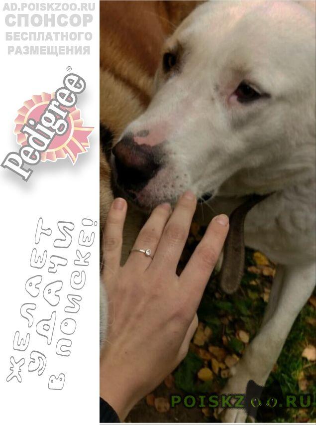 Пропала собака не теряем надежды найти нашу девочку #; г.Новосибирск