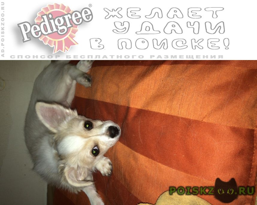 Пропала собака любимая собачулька г.Москва