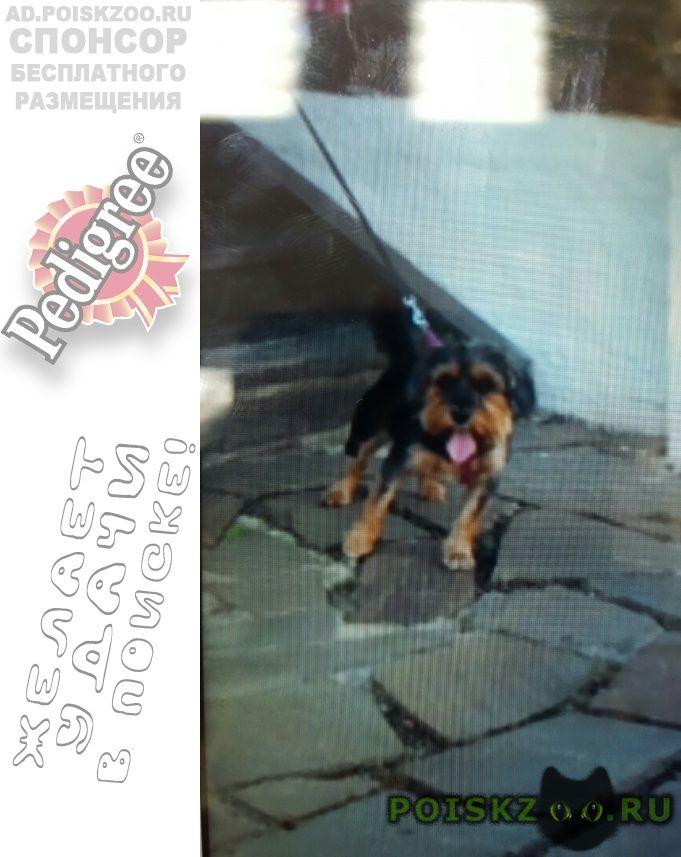 Пропала собака поиски продолжаются г.Москва