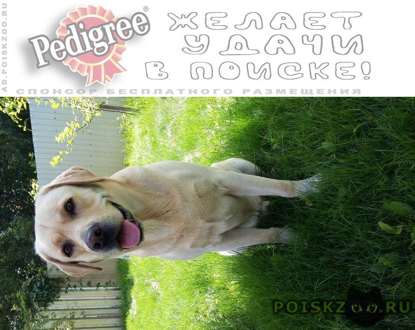 Пропала собака кобель лабрадор мальчик 6 лет г.Пенза