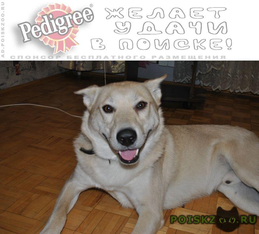 Пропала собака кобель г.Воскресенск