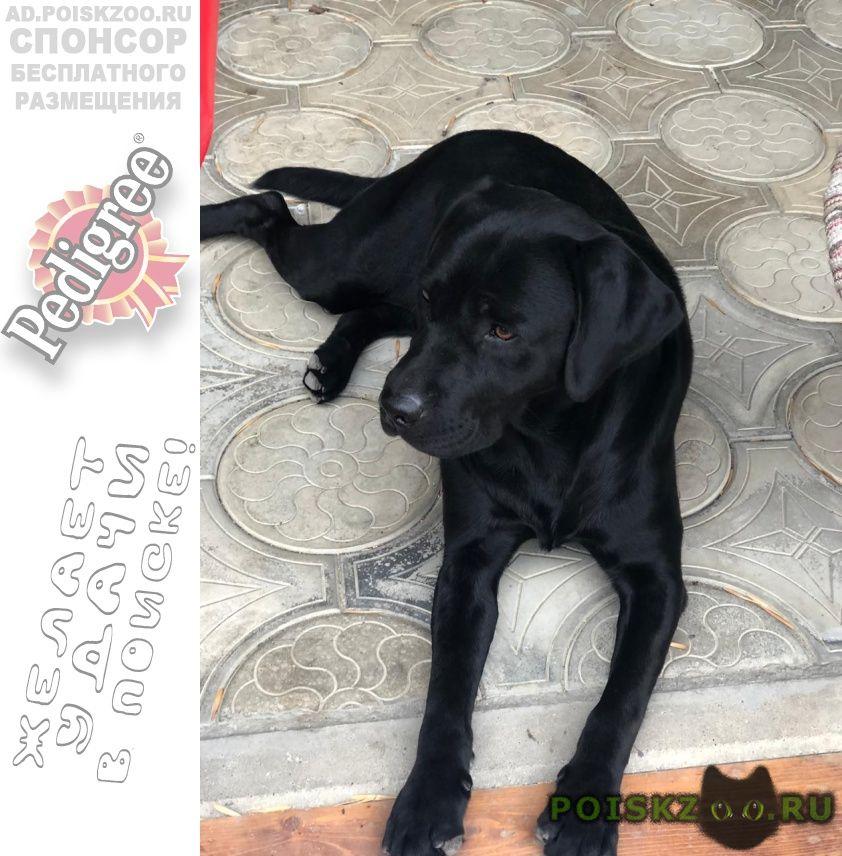 Пропала собака кобель г.Иноземцево