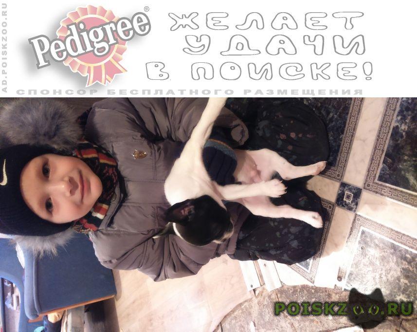 Пропала собака кобель вознаграждение г.Комсомольск-на-Амуре