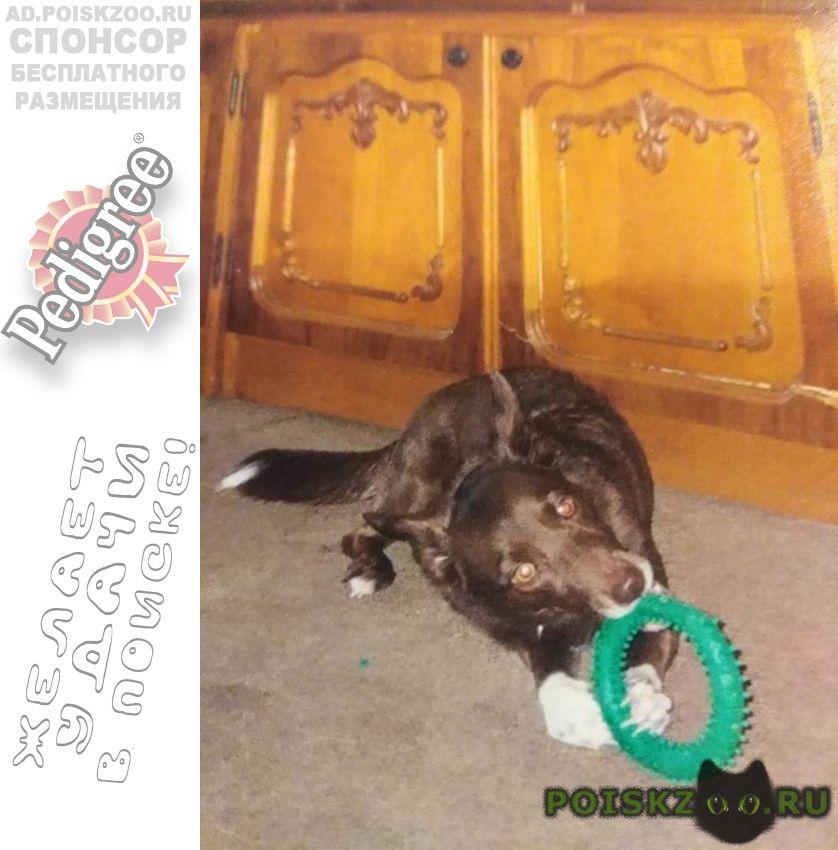 Пропала собака ул.5-я кожуховская 18 янв. г.Москва