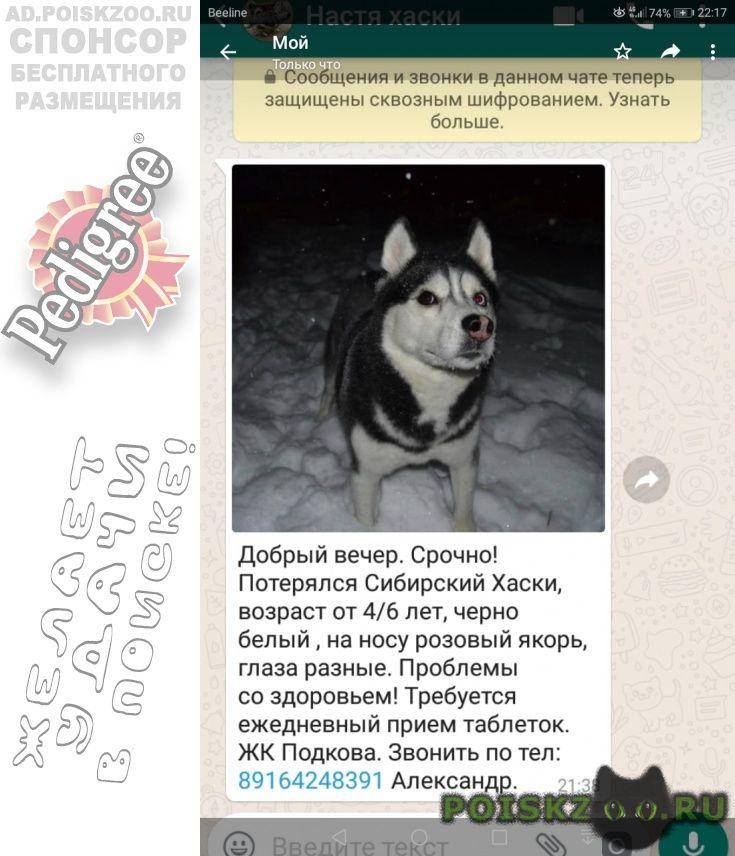 Пропала собака кобель г.Голицыно (Московская обл.)