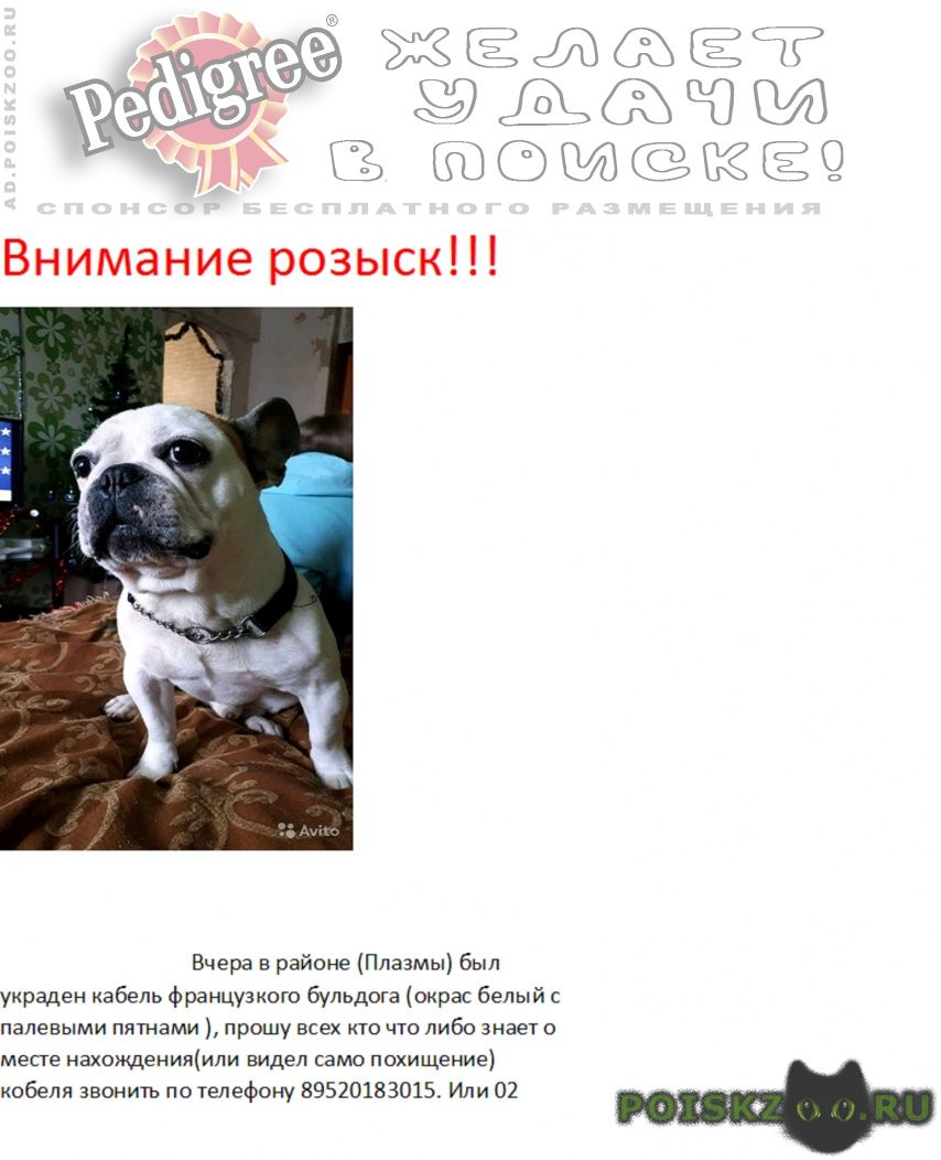 Пропала собака кобель французик г.Донской