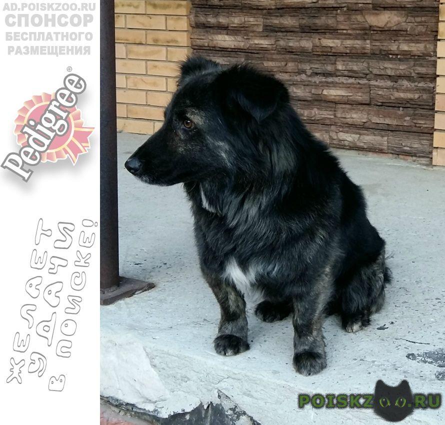 Пропала собака кобель г.Новосибирск