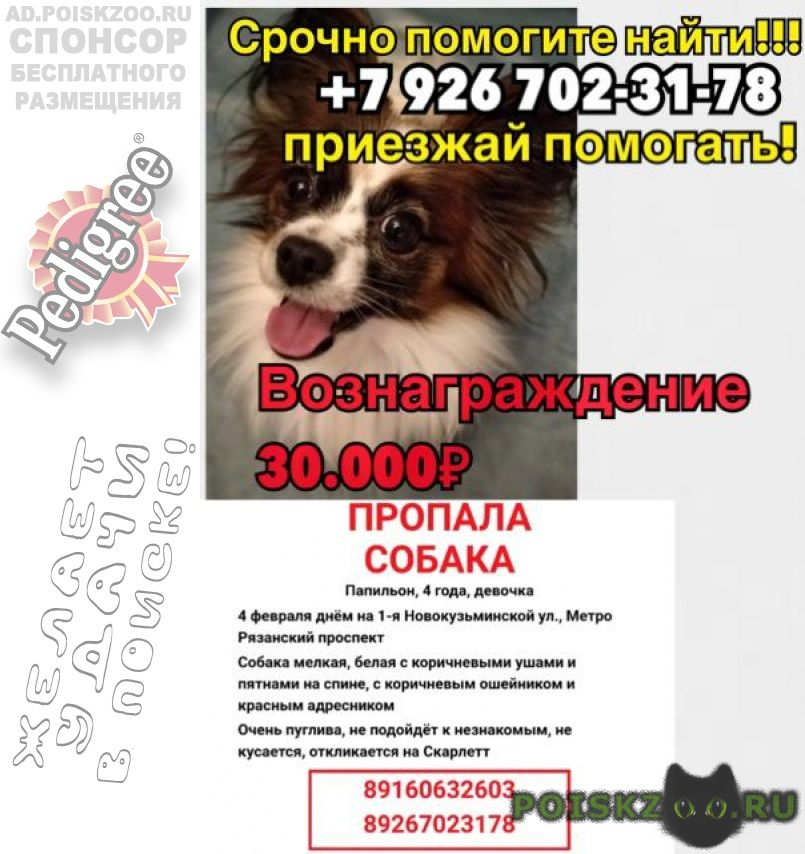 Пропала собака 4.02 г.Москва