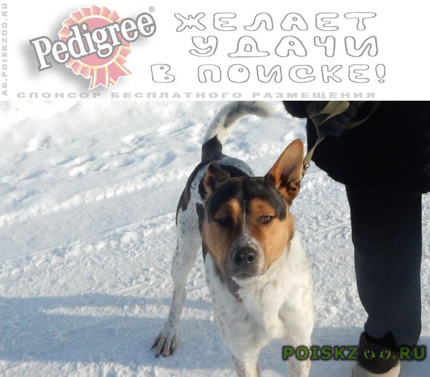 Пропала собака кобель и еще один г.Белгород