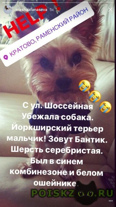 Пропала собака кобель г.Жуковский