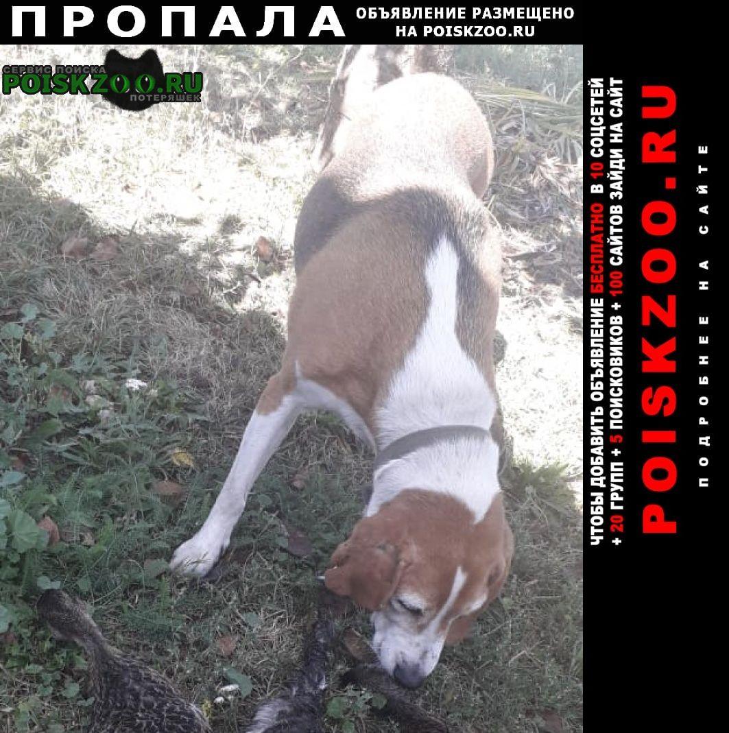 Пропала собака эстонка Глазуновка