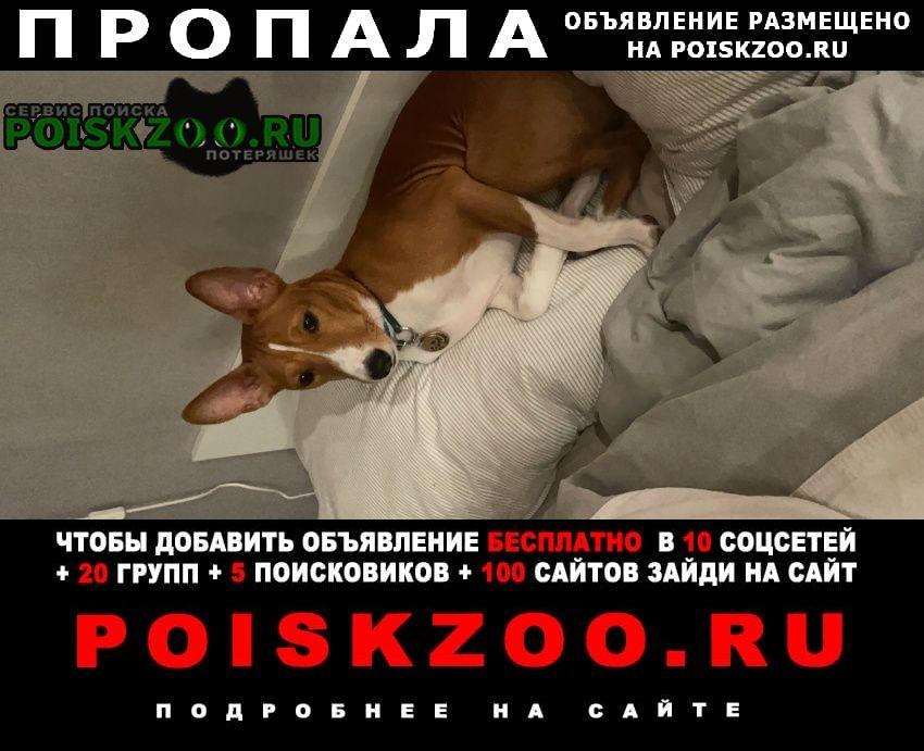 Пропала собака кобель мартин Красногорск