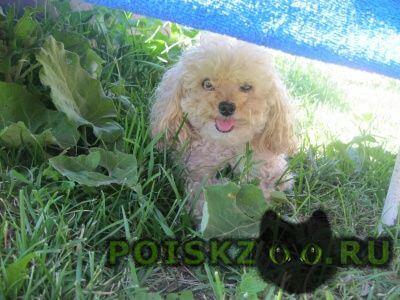 Пропала собака помогите вернуть члена семьи домой г.Медынь