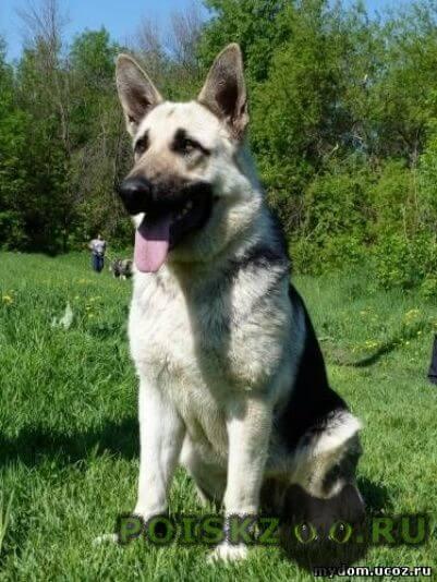 Пропала собака г.Климовск