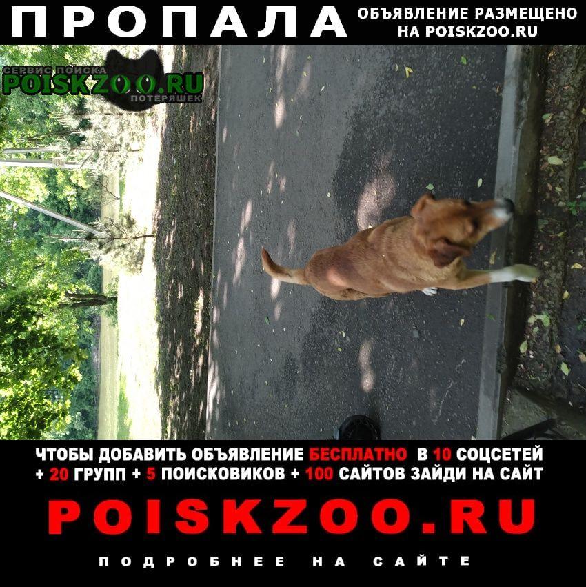 Пропала собака кобель вознаграждение г.Ростов-на-Дону
