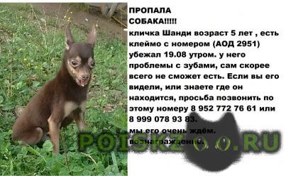 Пропала собака кобель убежал малыш г.Нижний Новгород