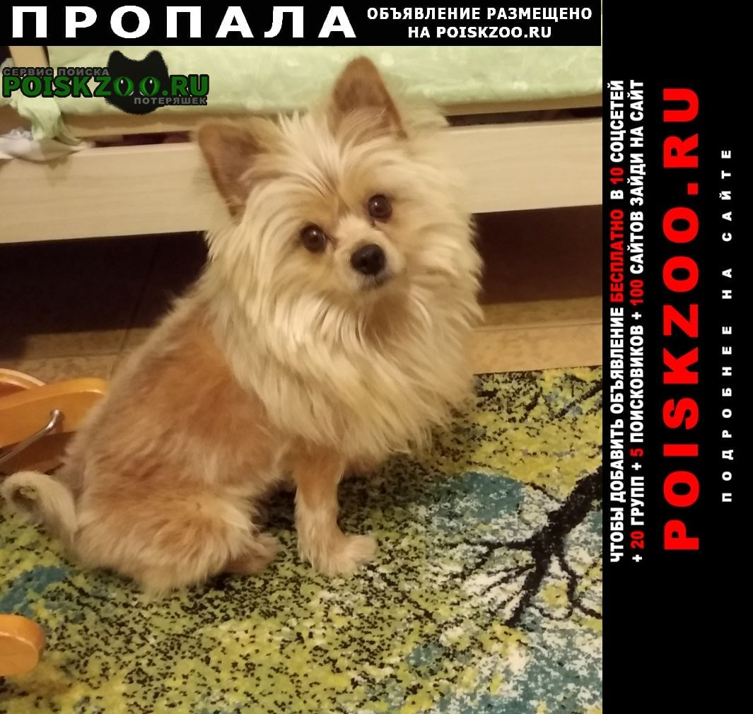 Пропала собака очень ждём домой Видное