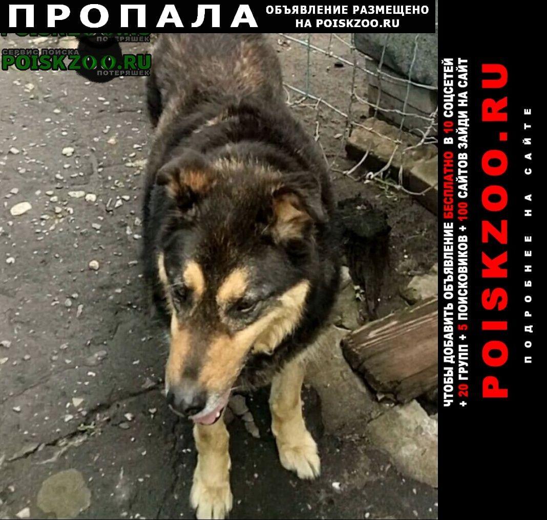 Пропала собака 10лет Воронеж