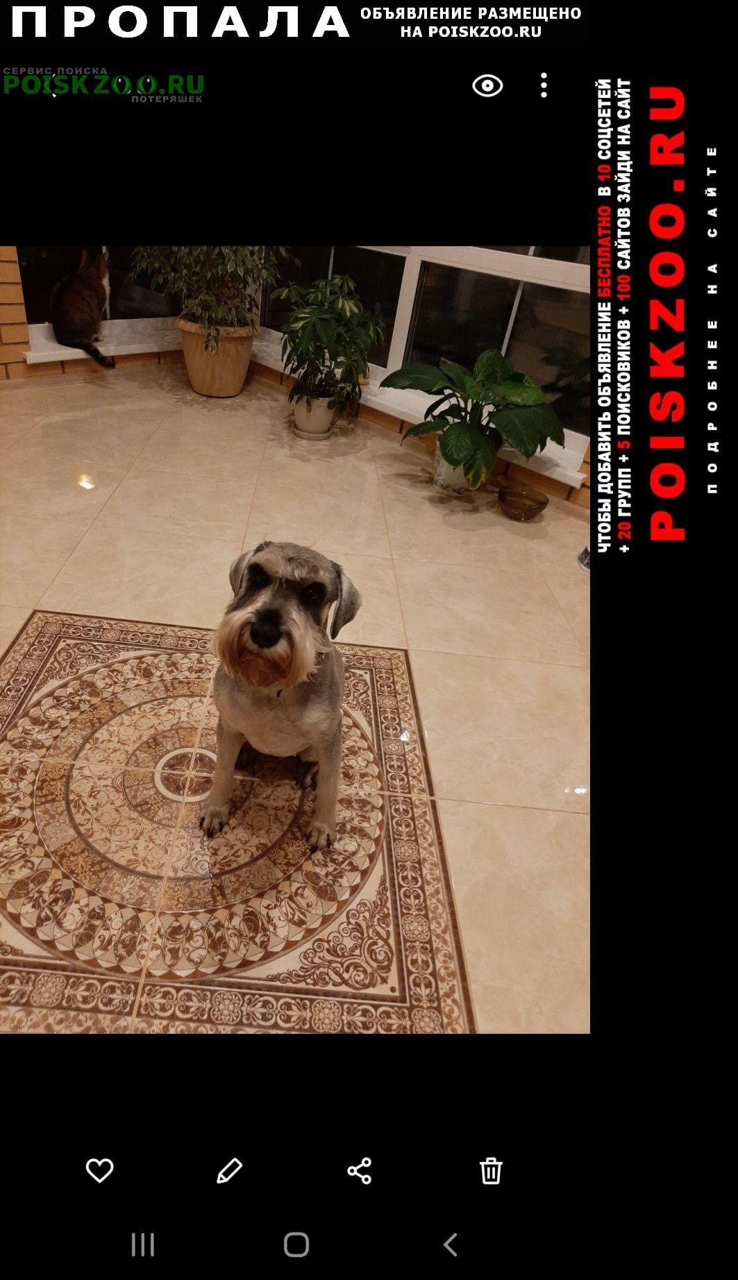 Пропала собака помогите найти собаку Алабино
