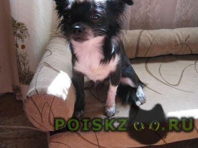 Пропала собака помогите найти г.Санкт-Петербург