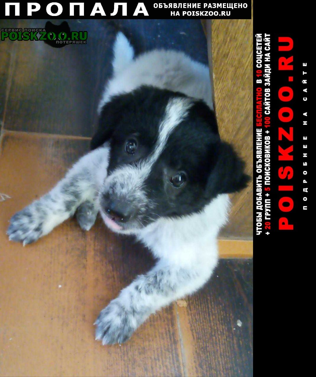 Пропала собака щенок Астрахань