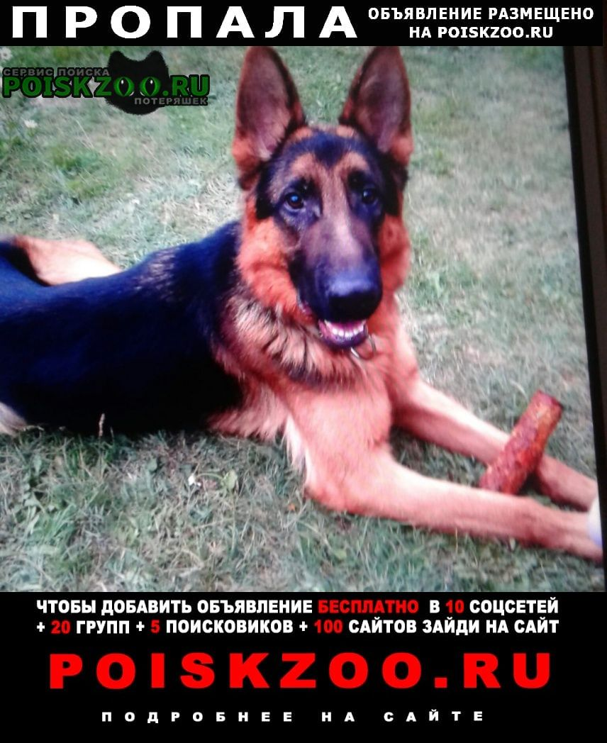 Пропала собака кобель немецкая овчарка помогите найти Симферополь
