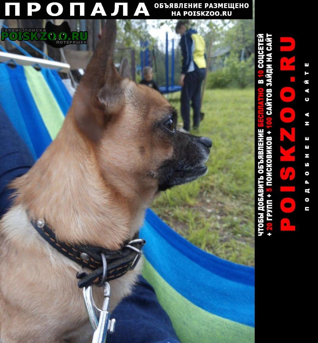 Пропала собака кобель чихуахуа зовут тишка Рыбное