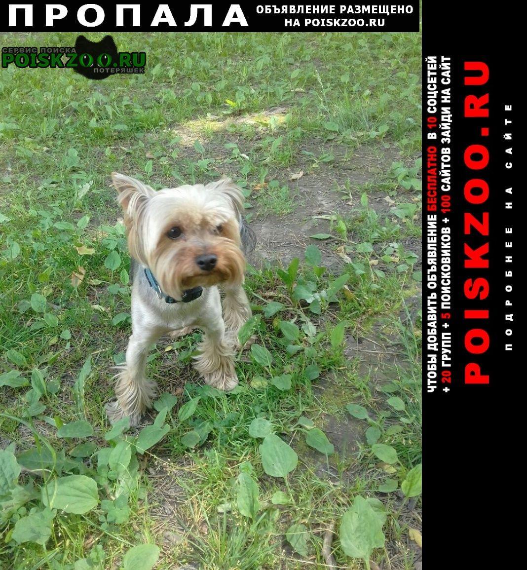 Пропала собака кобель г.Йошкар-Ола