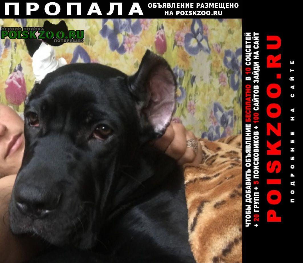 Пропала собака щенок кане-корсо 5 мес. чёрный Россошь