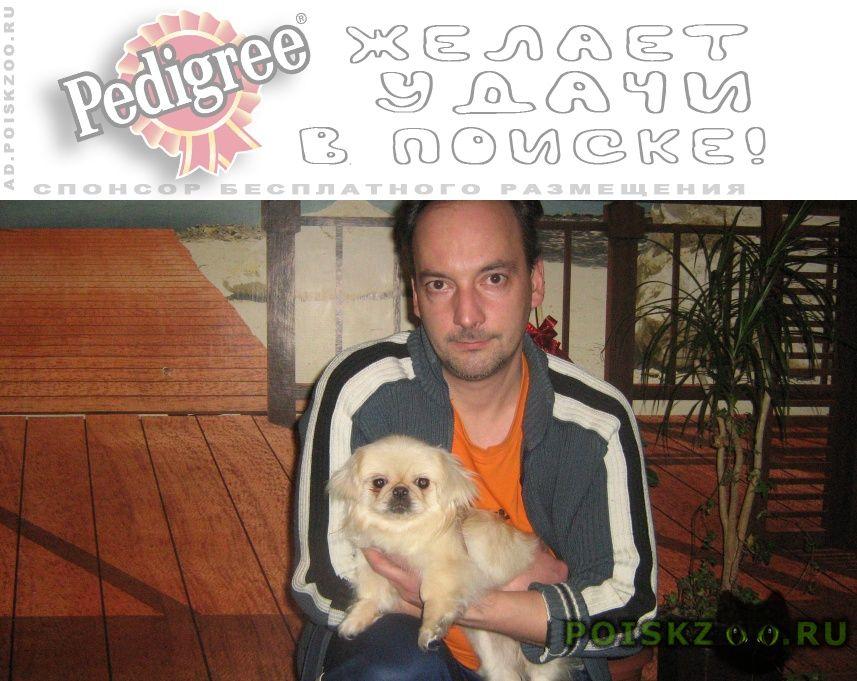 Пропала собака возраст год г.Новомосковск