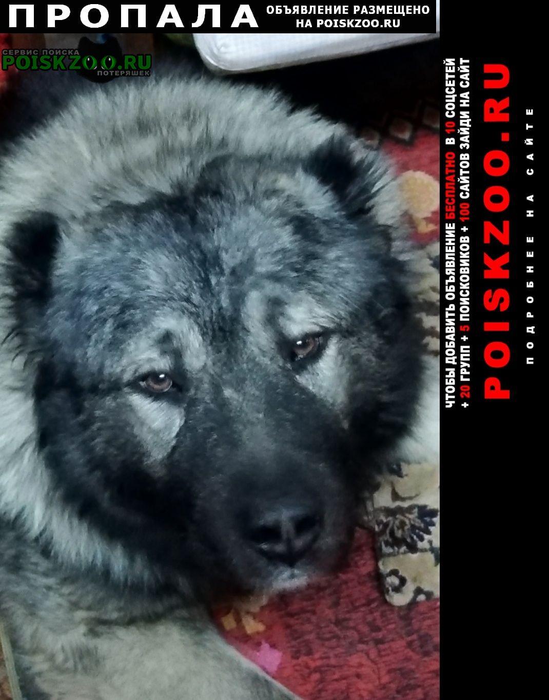 Оренбург Пропала собака кавказская овчарка