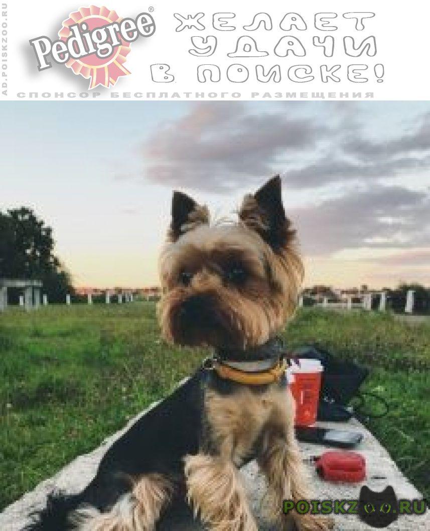 Пропала собака кобель г.Кострома