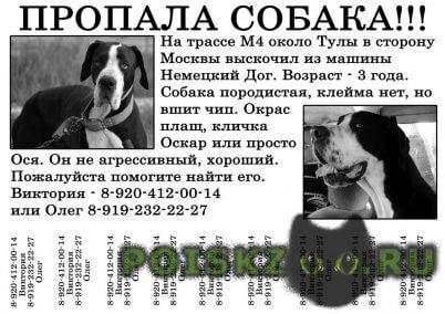 Пропала собака кобель помогите найти г.Тула