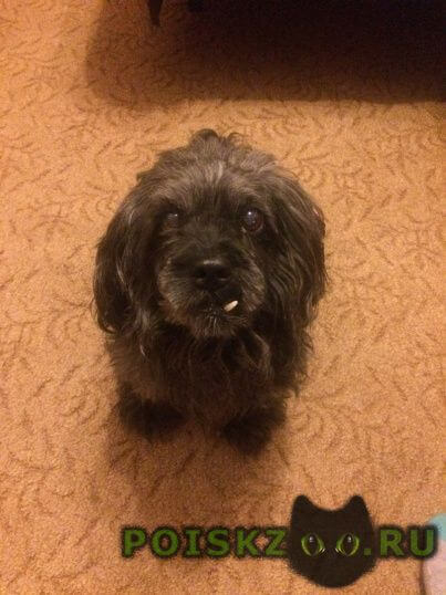 Пропала собака кобель г.Мурманск