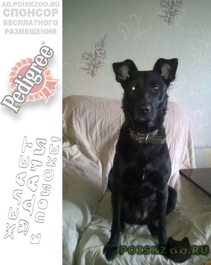 Пропала собака важна любая информация г.Челябинск