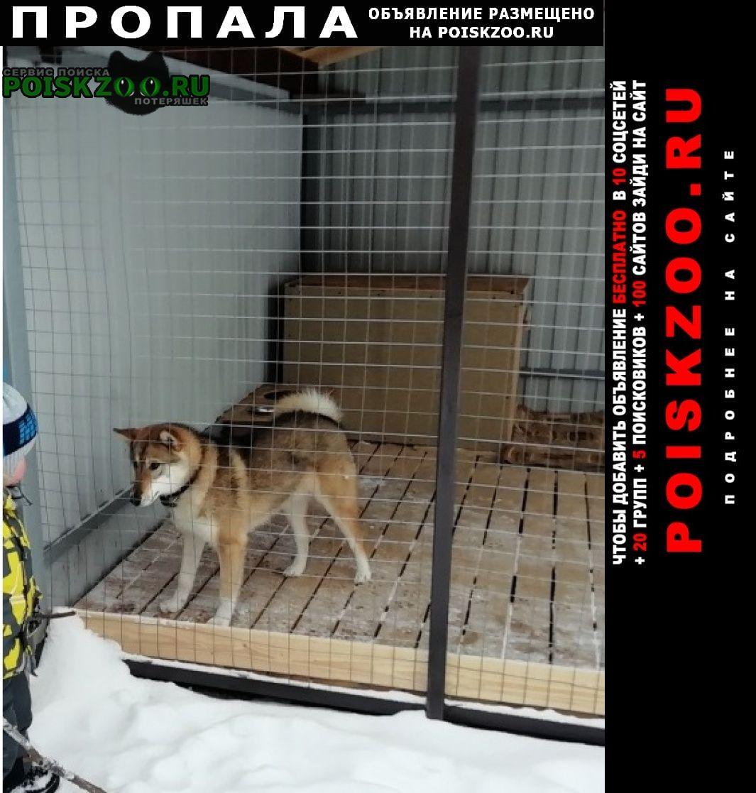Пропала собака Фряново